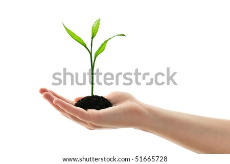 plant in woman hand isolated on white