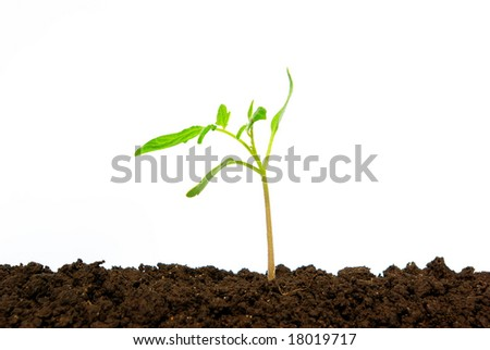 plant on white background
