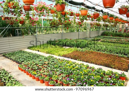 Plantation house with colorful flowers in Cyprus. - stock photo