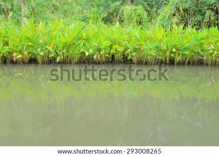 Plants At The Water Edge - stock photo