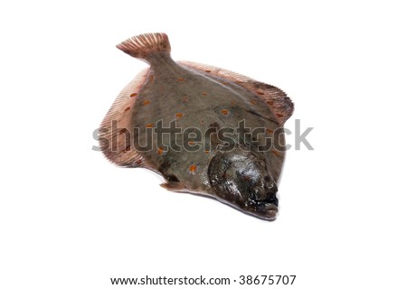 (Pleuronectes platessa) Plaice-fluke, Fluke, Plaice, Hen fish. Fresh caught lying on a light background