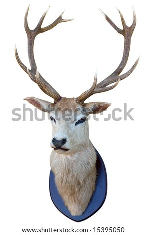 13 Point deer head isolated with clipping path - stock photo