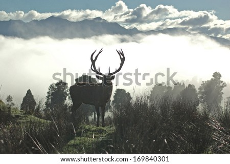 13 point red deer stag silhouetted against morning fog, West Coast, South Island, New Zealand - stock photo