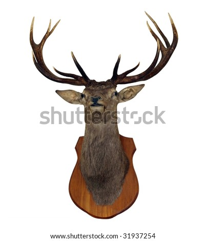 12 Point Red Stag Head isolated with clipping path - stock photo
