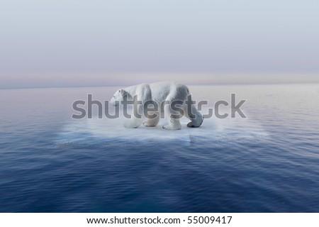 polar bear on little iceberg symbol of climate change - stock photo