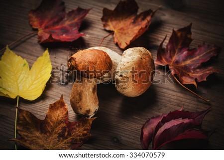 porcini mushrooms  - stock photo