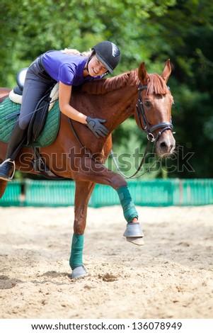 portrait of  a thoroughbred stallion - stock photo