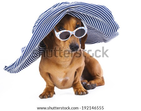 Portrait of Dachshund in sunglasses, Dog in hat - stock photo