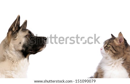 portraits of dog and cat in front on white isolated background loking to the center - stock photo