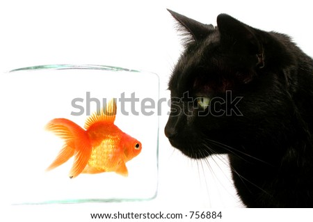 predator - stock photo