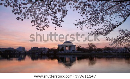 Predawn image of Jefferson Memorial and Cherry blossoms on the tidal basin