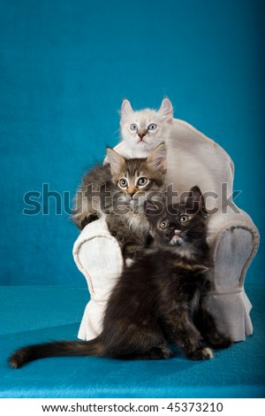 3 Pretty kittens on miniature chair, on blue background - stock photo