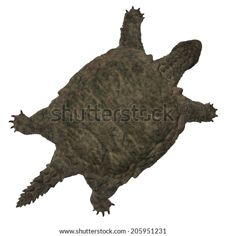 Proganochelys quenstedti the second oldest turtle species - stock photo