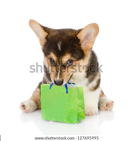 puppy bearing gift. isolated on white background - stock photo