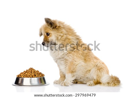puppy dog sitting with a bowl of dry dog food. isolated on white background - stock photo