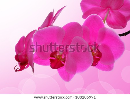 Purple orchid - close up with shallow DOF - stock photo