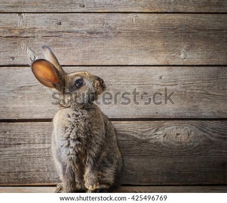 rabbit on wooden background - stock photo
