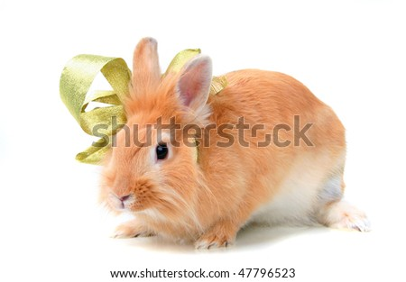 Rabbit with a bow. Isolated on white