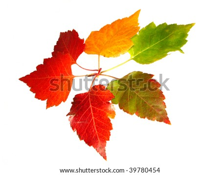 Rainbow Color     Leaves - stock photo
