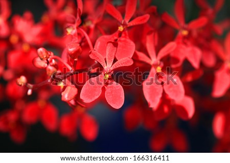 red orchid - stock photo