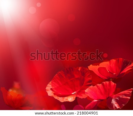 Red poppy background. Red poppies. Red flower background