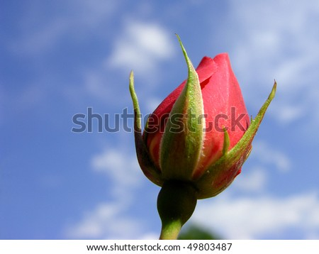 Red rose bud against blue sky - stock photo