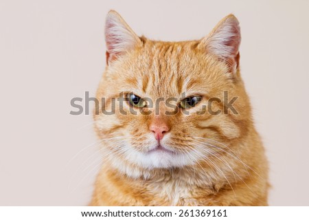 Red Smiling Cat  expecting for something  isolated on white background