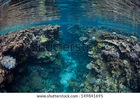 Reef-building corals form canyons in shallow water near a tropical island in the Solomon Islands.  This area is found within the Coral Triangle and is high biological diversity. - stock photo