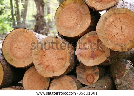 renewable raw material: a pile of logs recently harvested in the wood