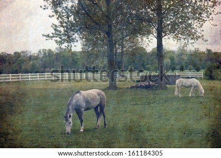 Retro style image of rural landscape, horse on the meadow - stock photo