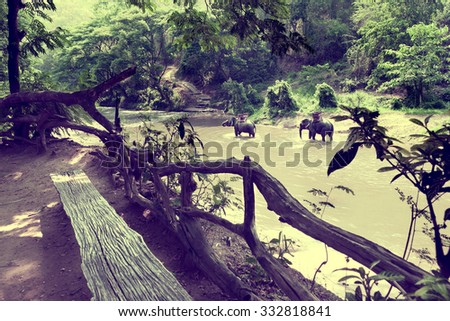 Ride on an elephant in forest at Chiang mai.Thailand.Exotic Asian travel. - stock photo