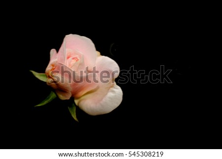 Rose bouquet with free space for text.field of pink rose