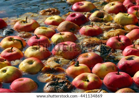 rotten apples on a water,organic pollution - stock photo