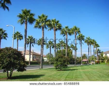 row of palm trees in nice neighborhood - stock photo