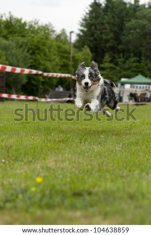 running full tilt on grass at a competition - stock photo