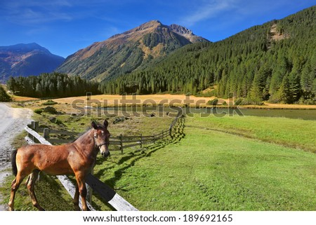 Rural pastoral. Farm fields separated from the dirt road the low fence made �¢??�¢??of logs. Behind the fence stands the rustic horse - stock photo