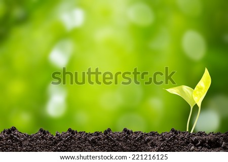 Saplings Plant sprout on green bokeh background  - stock photo