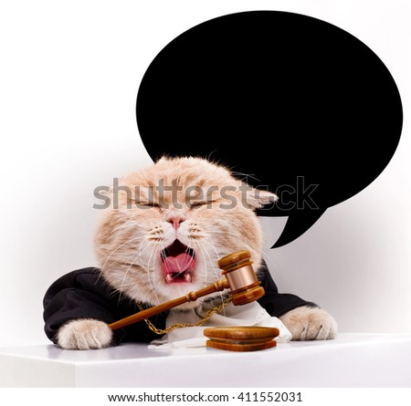 Screaming cat with judicial gavel. - stock photo