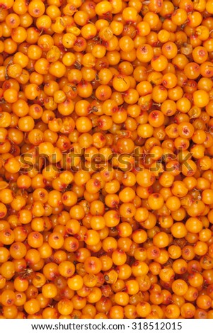 sea-buckthorn, background - stock photo