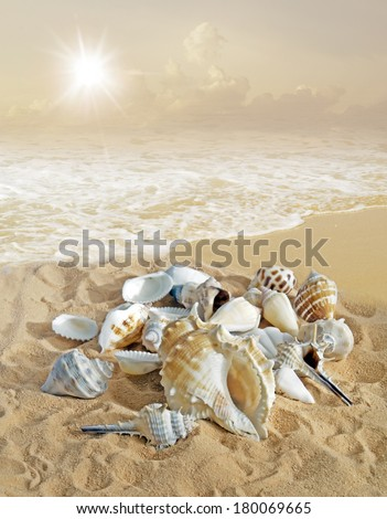 Sea shell background on  sand   - stock photo