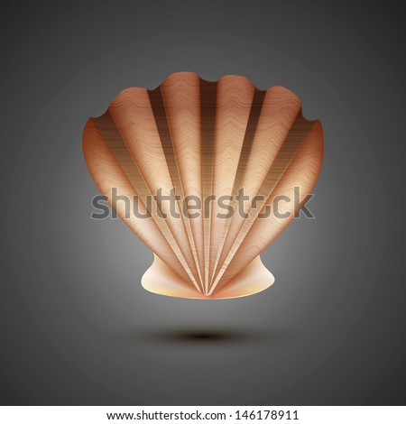 sea shell on a gray background