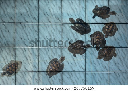 """sea turtle in pond"" mural. The tile painting concept - stock photo"
