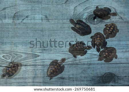 """sea turtle in pond"" mural. The wood painting concept - stock photo"