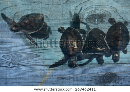 """sea turtle"" Mural. The wood painting concept - stock photo"