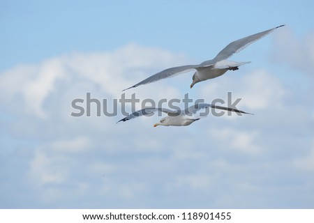 2 seagulls flying - stock photo