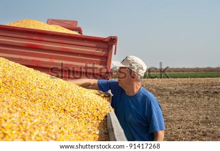 senior farmer  in time harvest - stock photo