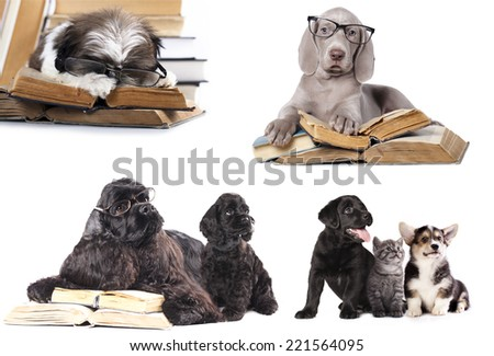 set dogs,  puppy and book - stock photo