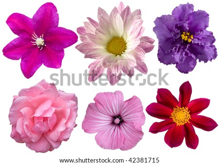 Set of flowers in different - stock photo