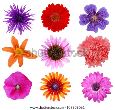 set of planting flowers - stock photo