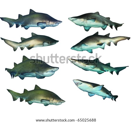 8 shark collection - stock photo